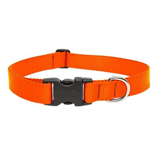 LUPINE nyakörv (Narancssárga 2,5 cm széles 41-71 cm )